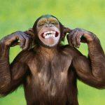 Maymun Türleri, Maymunların 13 Farklı Türü